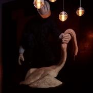 Foto: Seven Swans